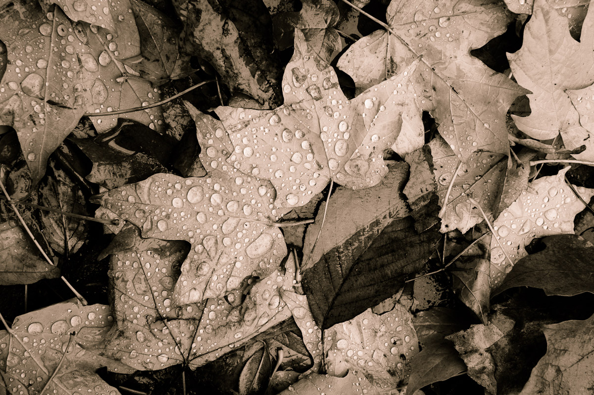 A fine art photo of leaves showing the End of Fall